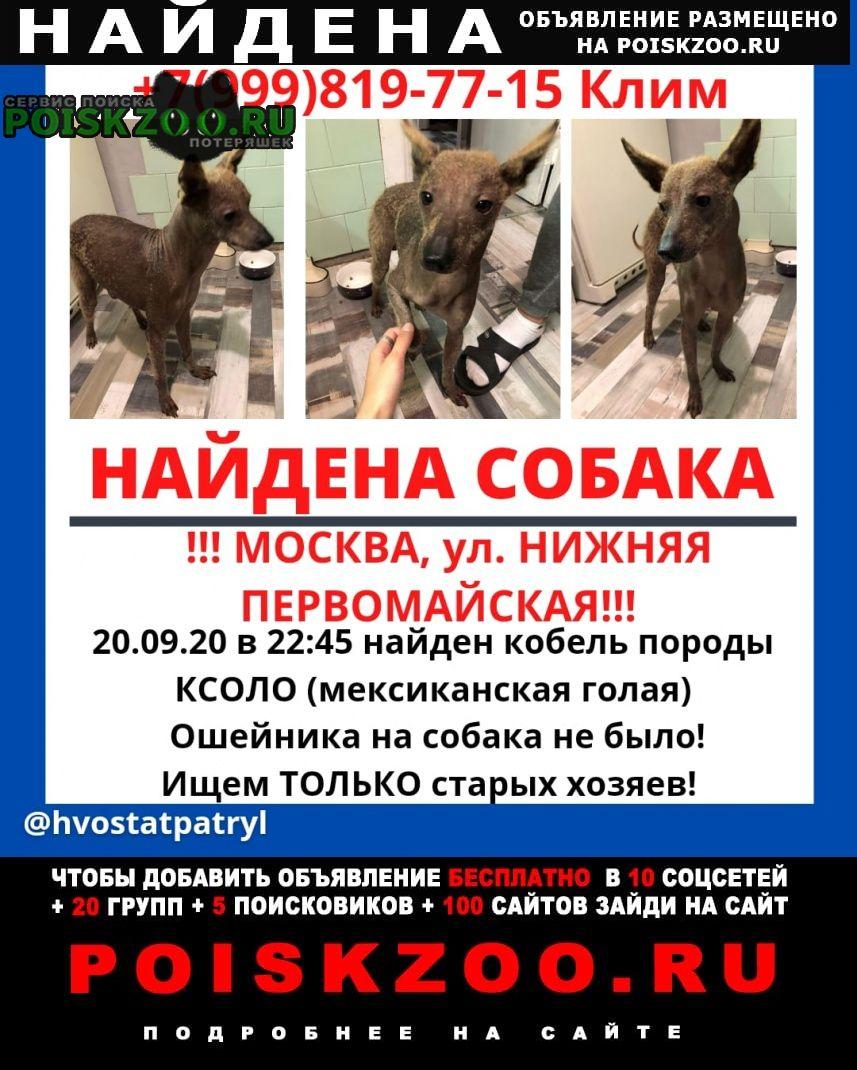 Москва Найдена собака 20 сентября, в 22:45
