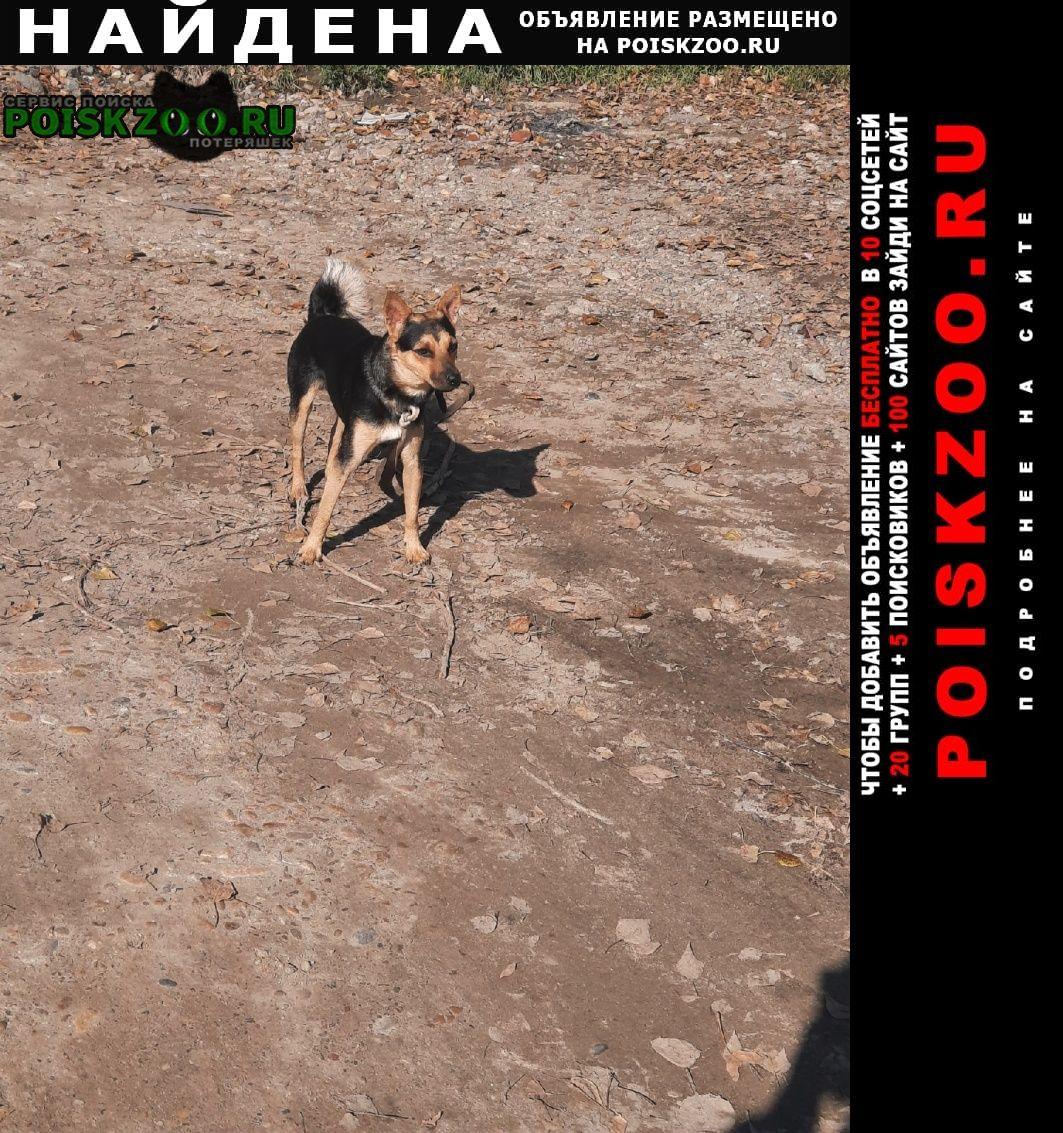 Иркутск Найдена собака, кажется, что убежал от хозяина