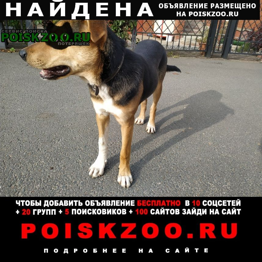 Найдена собака Казань