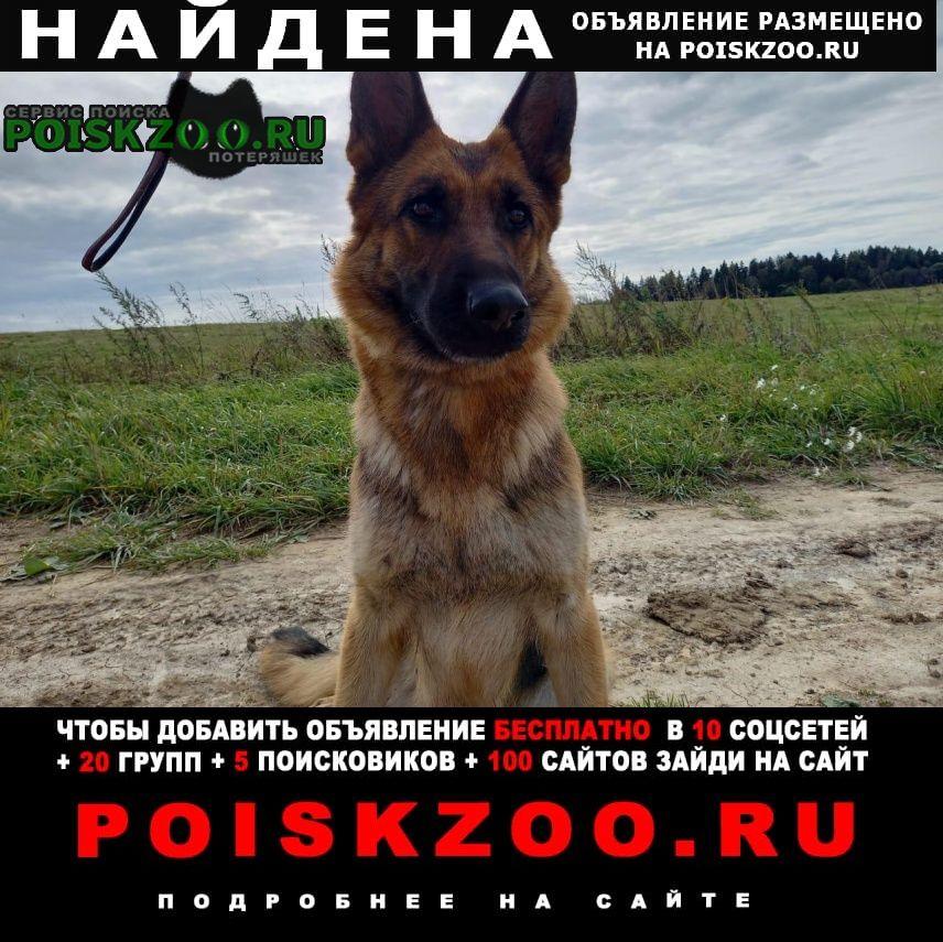 Оленино Найдена собака новорижское ш. в районе