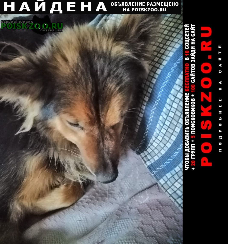 Найдена собака кабель, длинношёрстый черный с рыжим Новосибирск