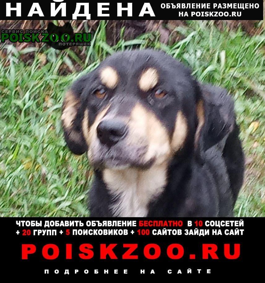 Найдена собака в городке нефтяников Омск
