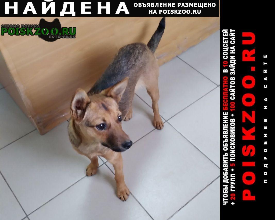 Найдена собака возможно вы ищите Мариинск