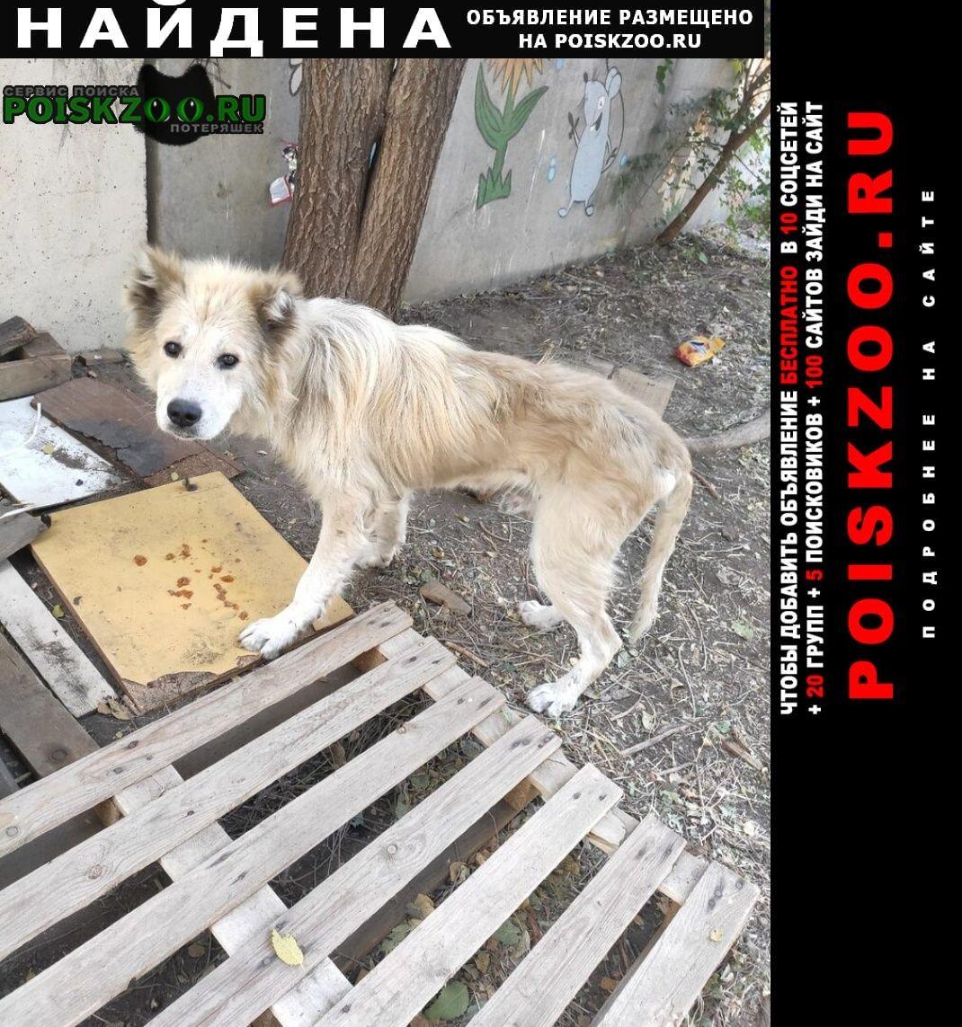 Найдена собака кавказская овчарка Луганск