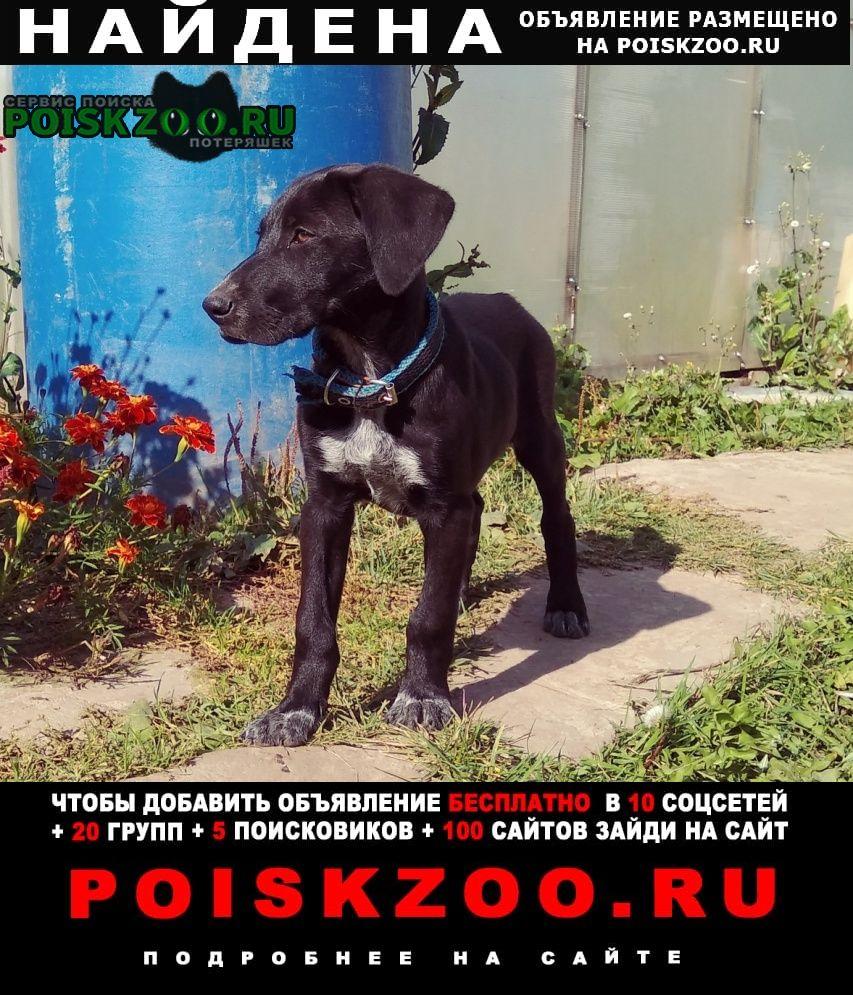 Дзержинск Найдена собака поселок игумново