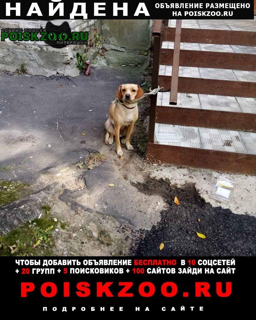 Владимир Найдена собака