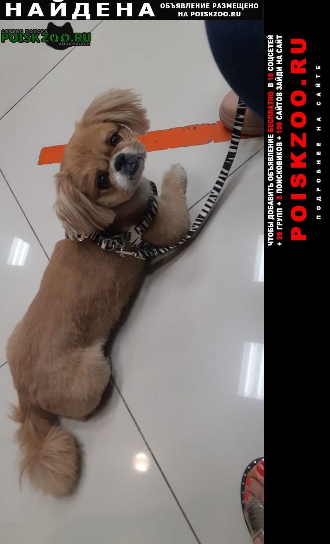 Найдена собака собачка Ростов-на-Дону