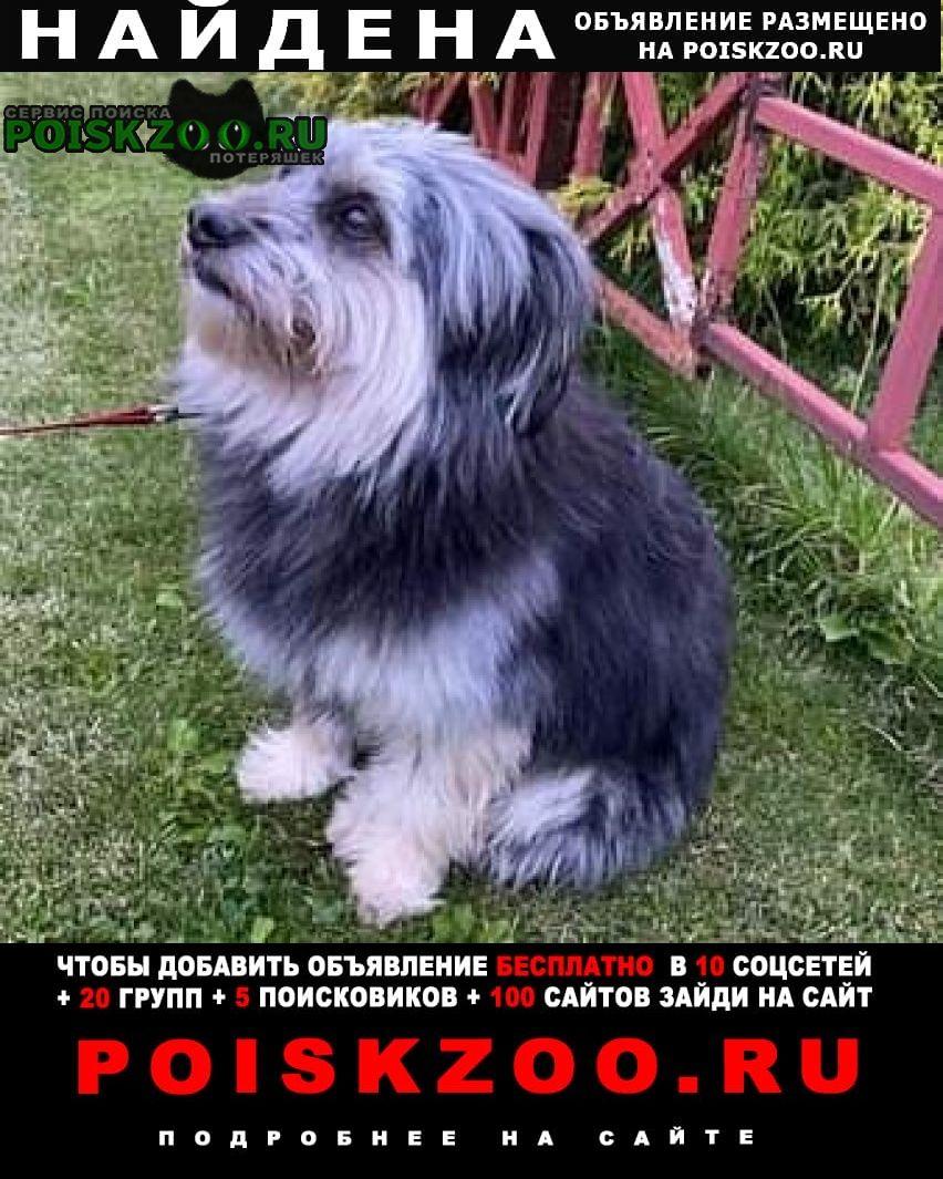 Найдена собака в ошейнике Истра