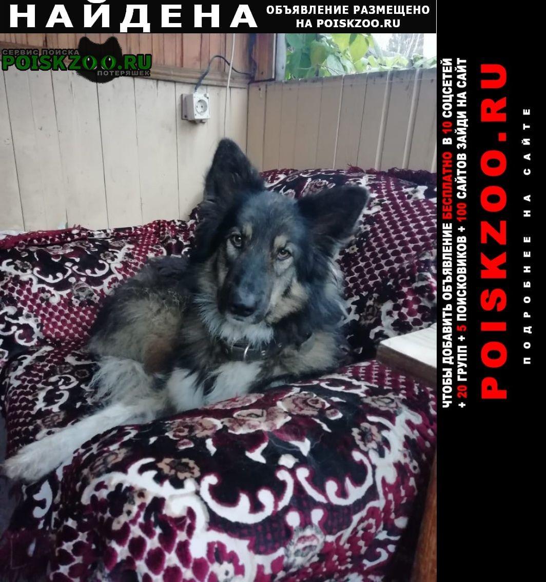 Найдена собака Нижневартовск