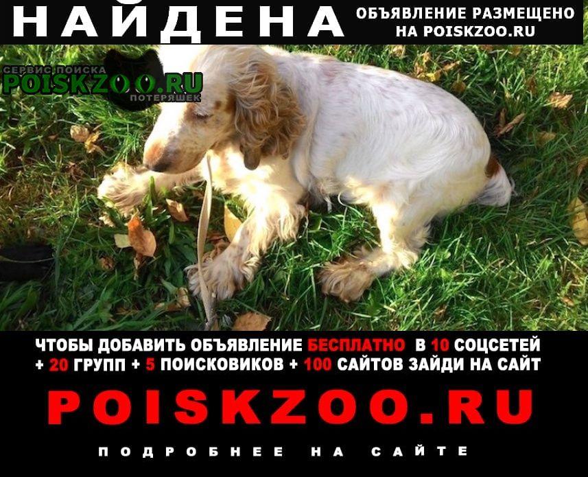 Найдена собака спаниель юао бирюлёво-восточное Москва