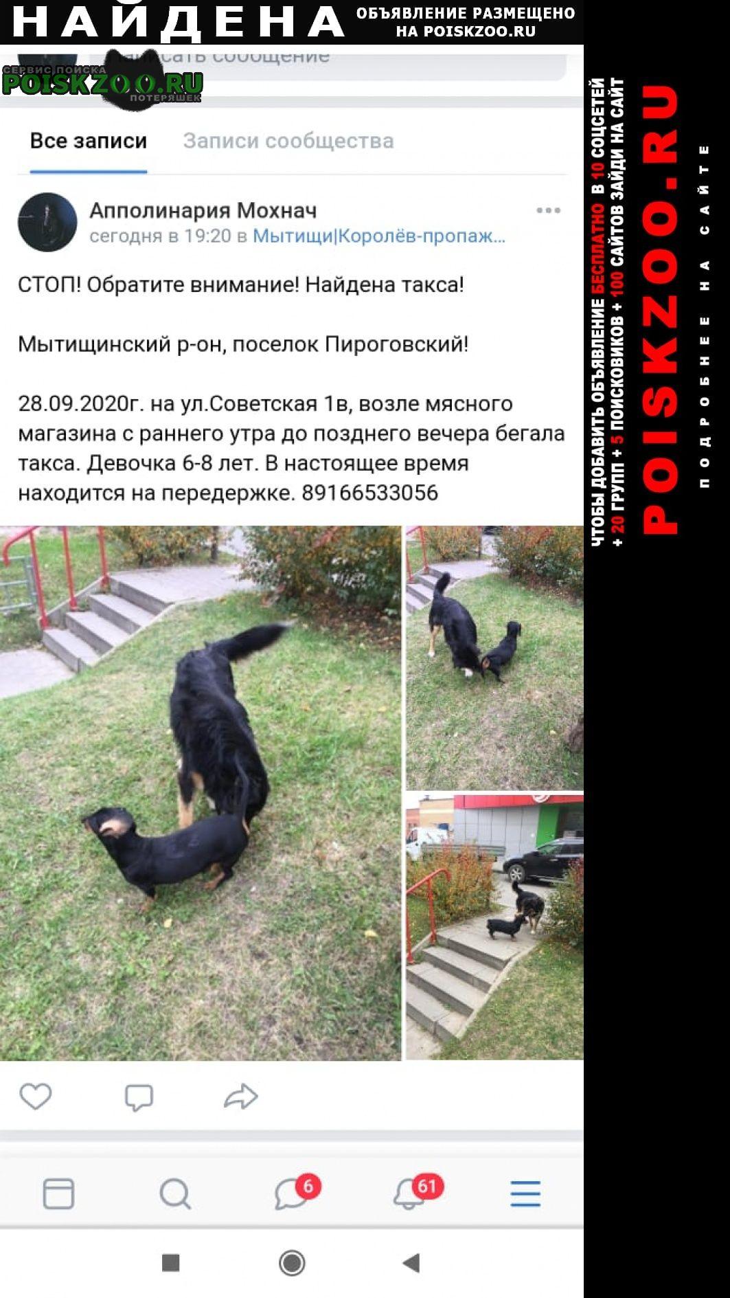 Пироговский Найдена собака