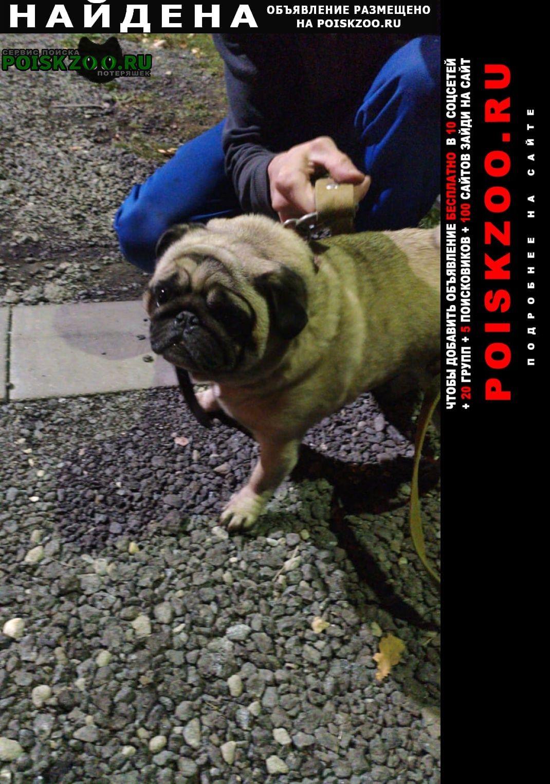 Пироговский Найдена собака на фабричном проезде