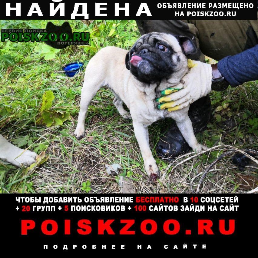 Найдена собака Гатчина