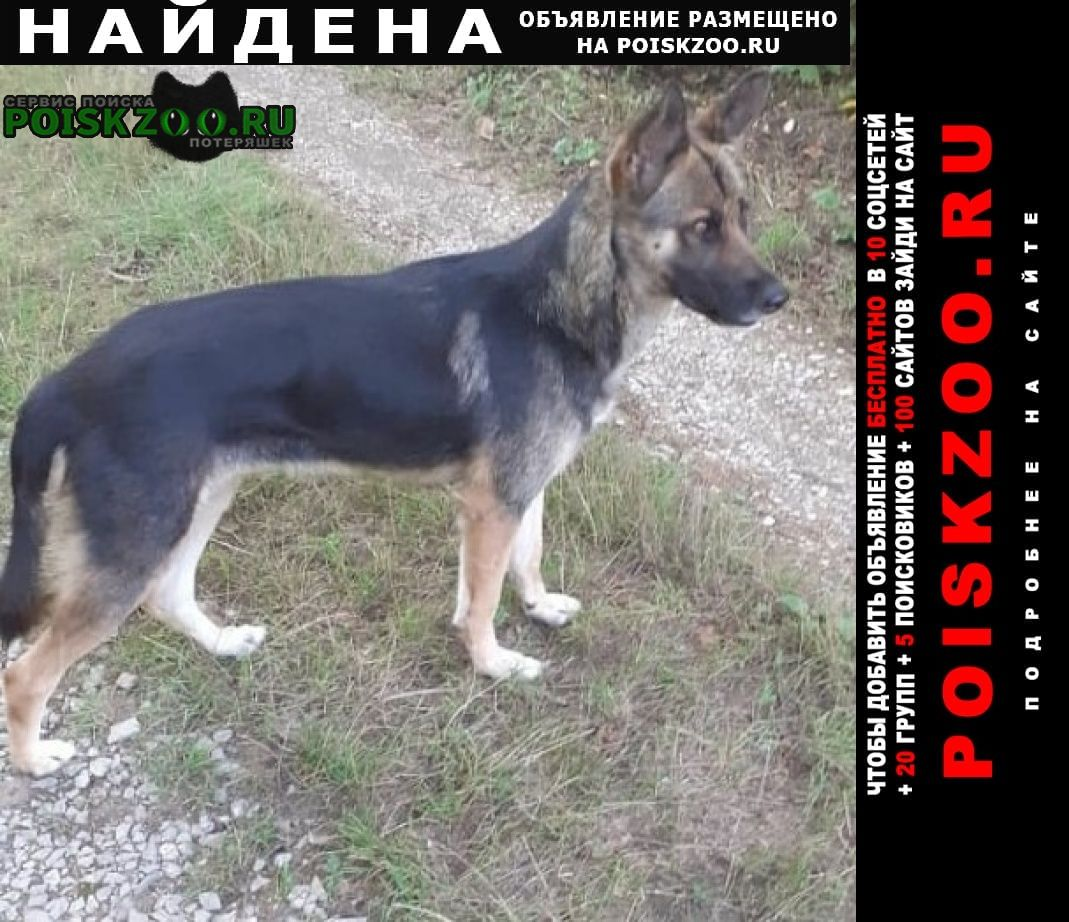 Найдена собака метис овчарки энем Краснодар