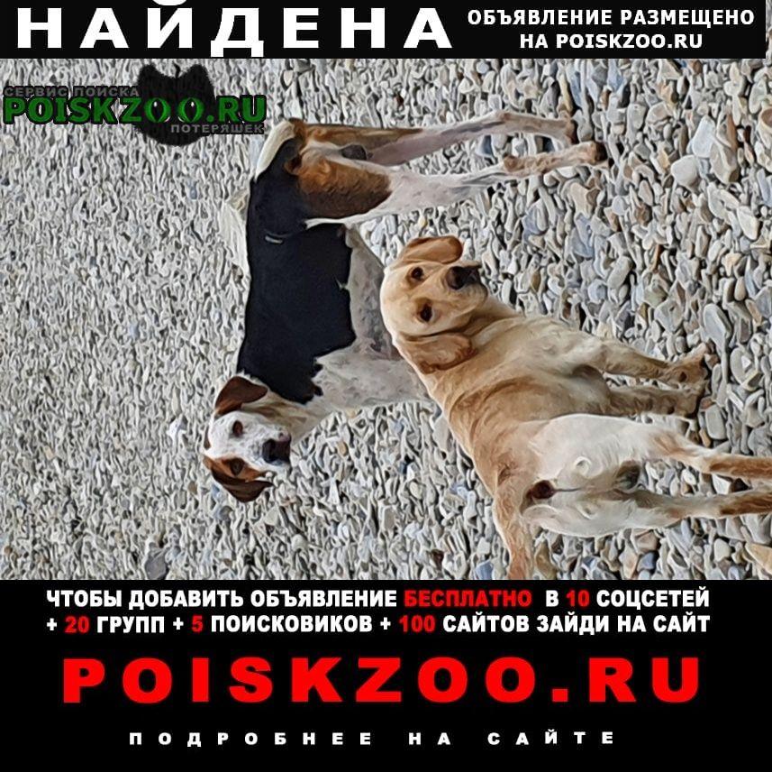Геленджик Найдена собака