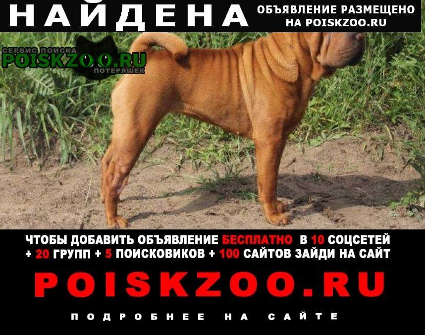 Кисловодск Найдена собака