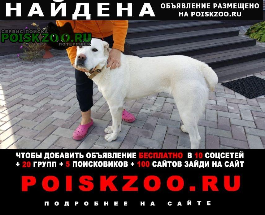 Найдена собака белая сука алабая Троицк