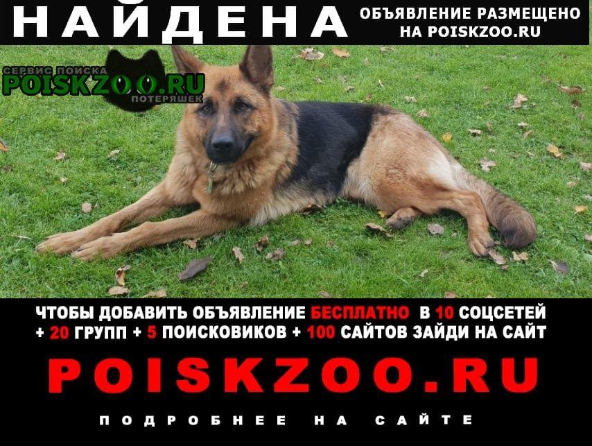 Найдена собака немецкая овчарка красная поляна Лобня