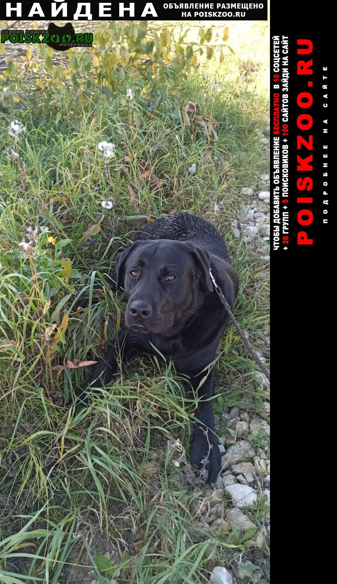 Шатура Найдена собака
