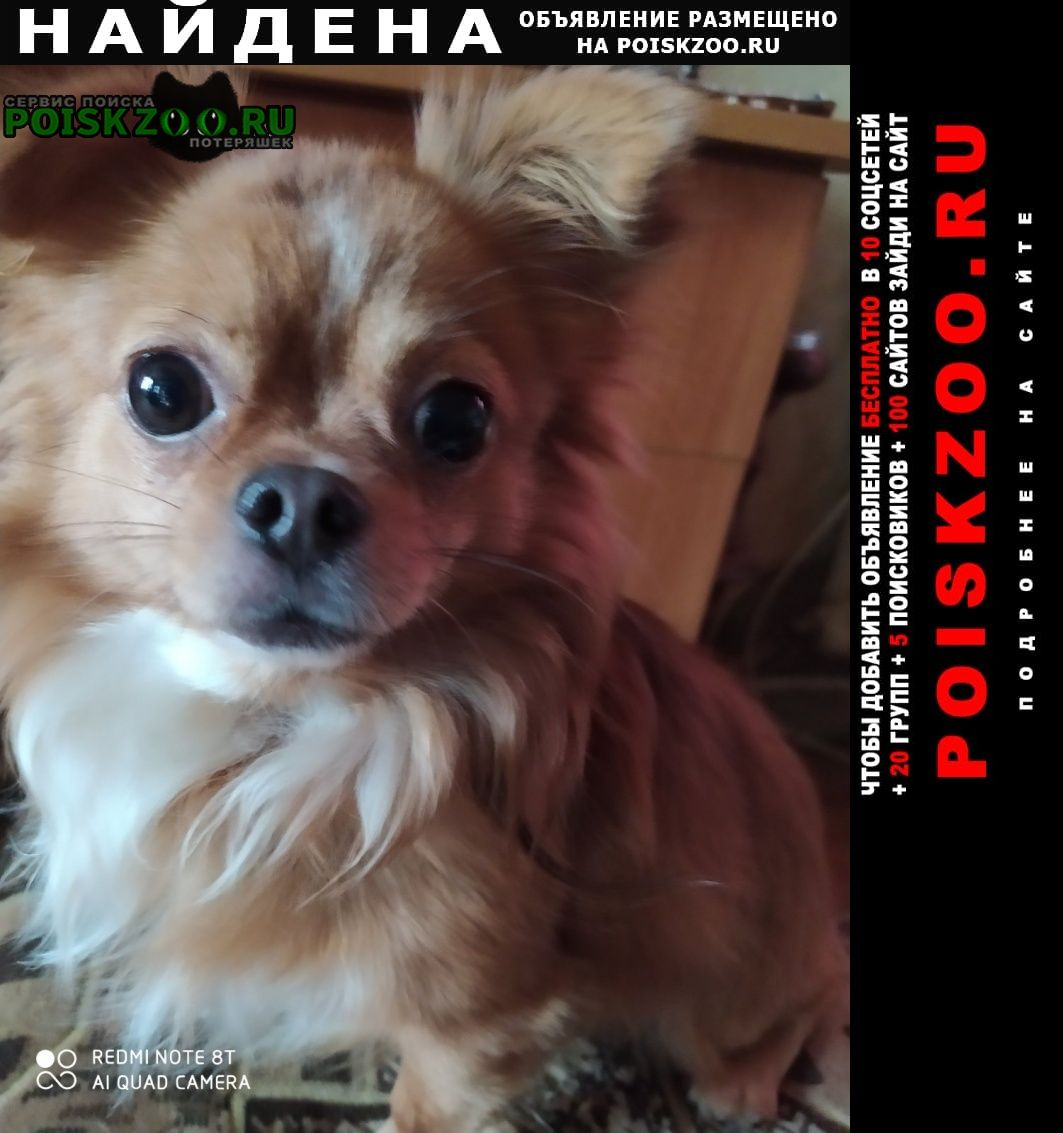 Найдена собака Луганск