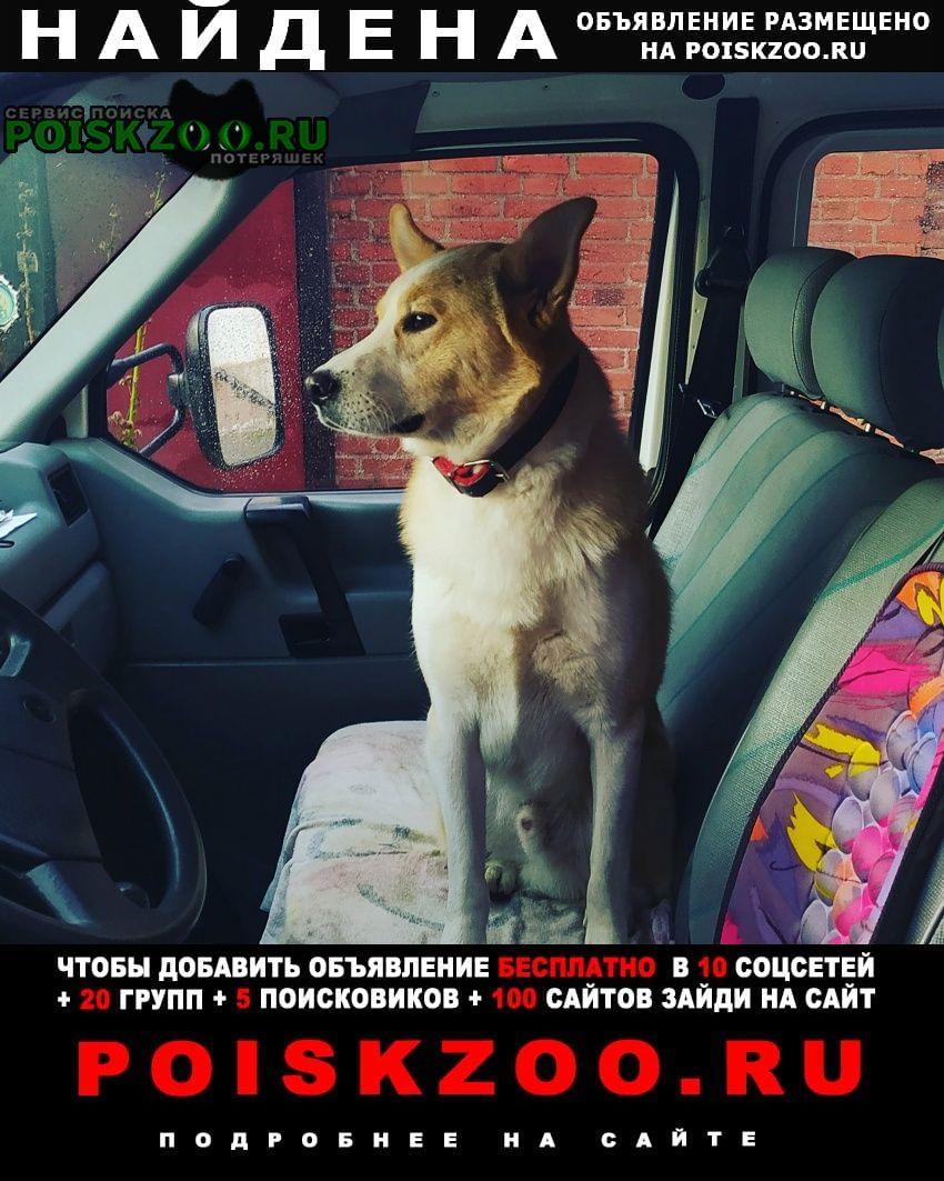 Багратионовск Найдена собака