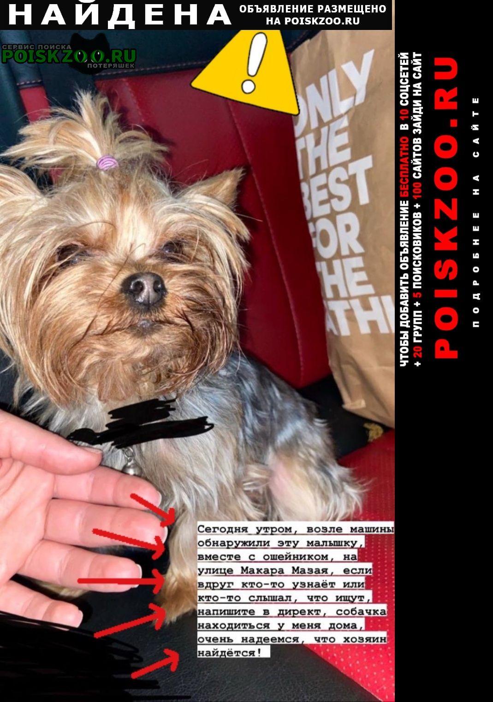 Найдена собака йорк. девочка. Тула