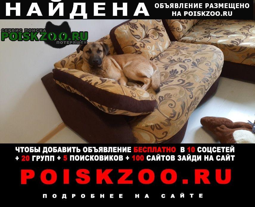 Найдена собака хозяин найдись Санкт-Петербург