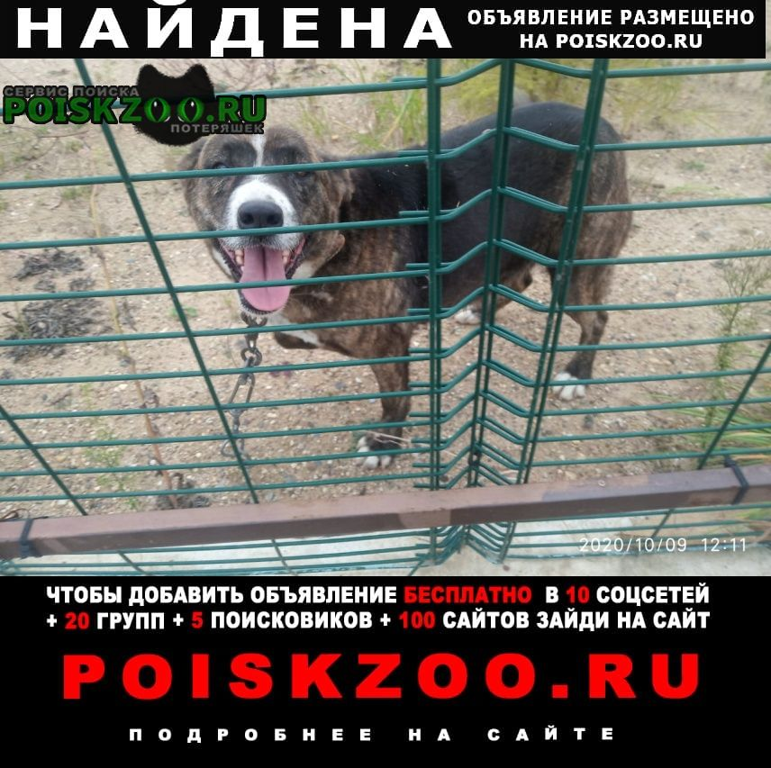 Найдена собака 4-й участок Икша
