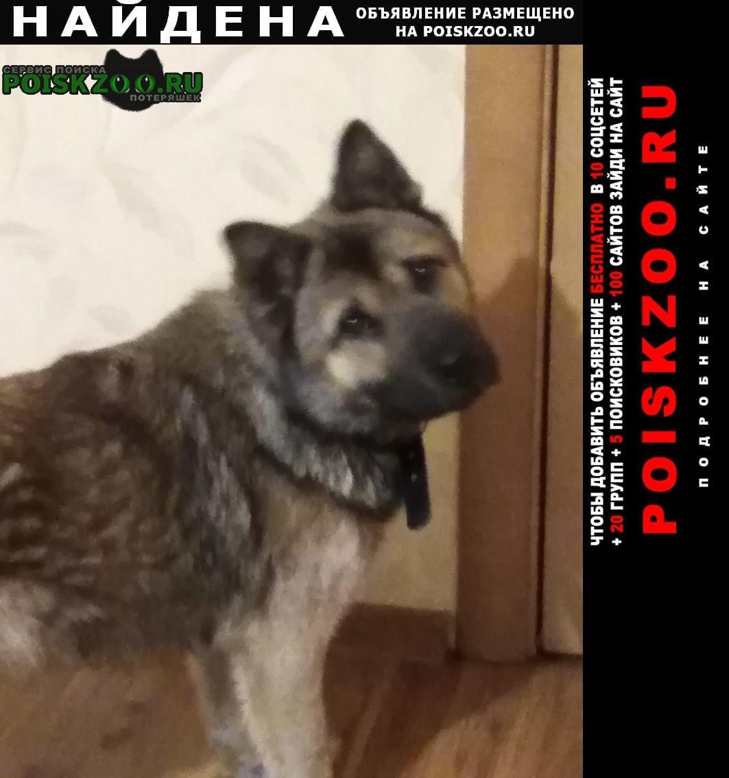 Найдена собака Нижний Тагил