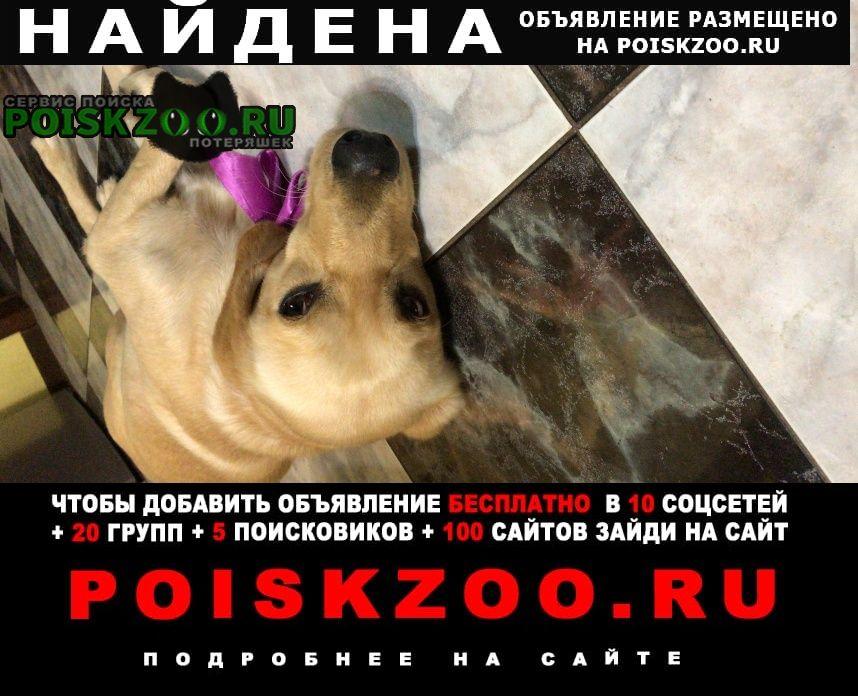 Найдена собака   хозяин, найдись  Егорьевск