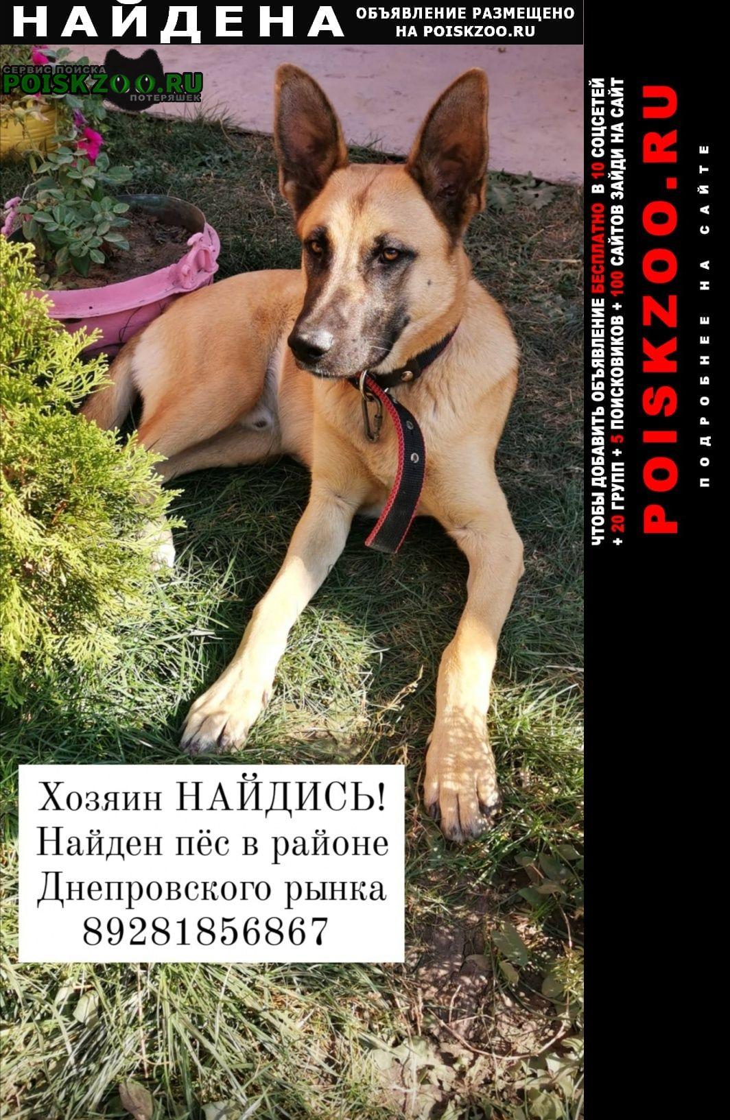 Найдена собака пёс Ростов-на-Дону