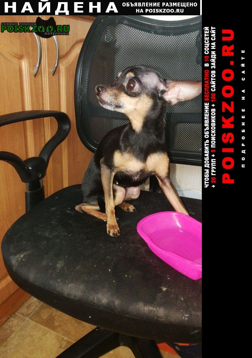 Найдена собака той-терьер Москва