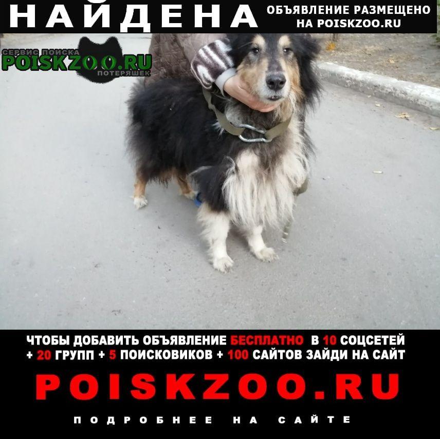 Воронеж Найдена собака аа