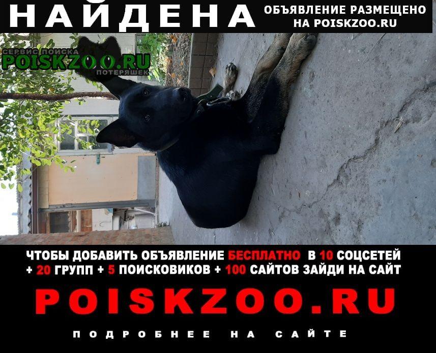 Краснодар Найдена собака кобель с ошейником