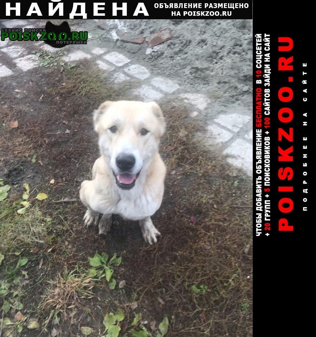 Барнаул Найдена собака алабай