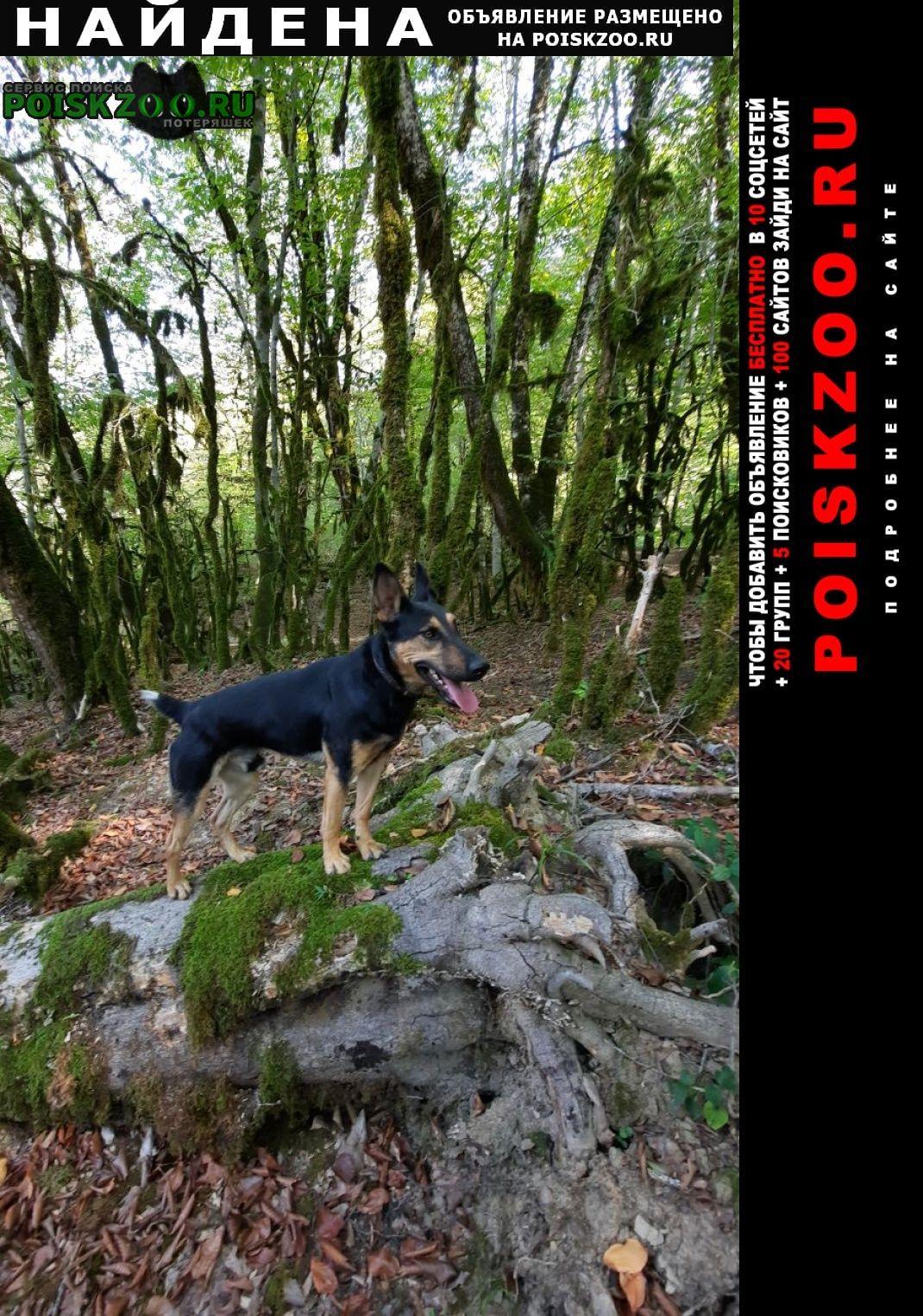 Найдена собака увязалась в голицыно осталась в к Адлер