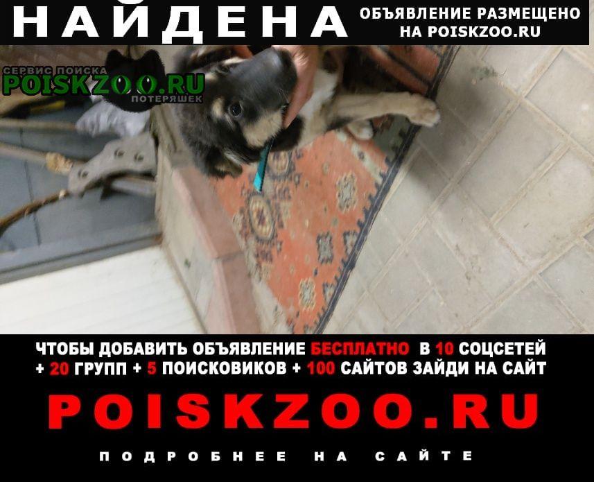 Найдена собака сжм Ростов-на-Дону