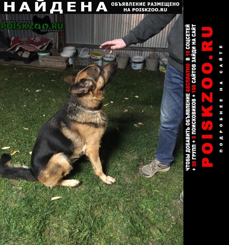 Казань Найдена собака