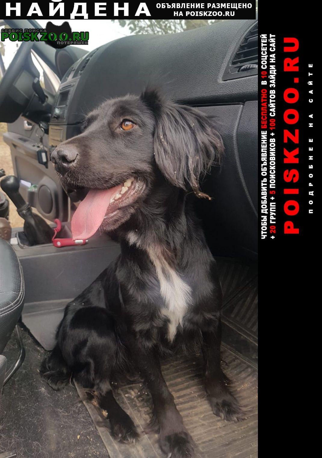 Павловская Найдена собака спаниель