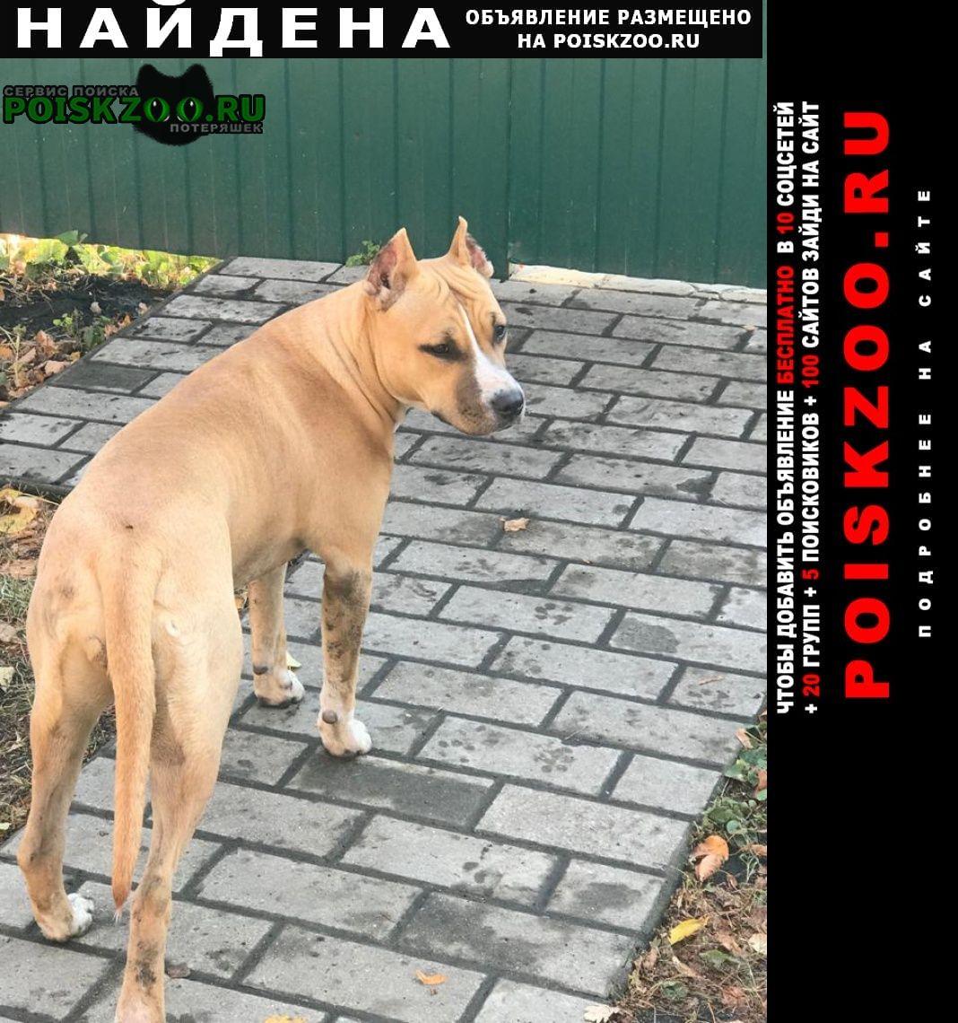 Воронеж Найдена собака