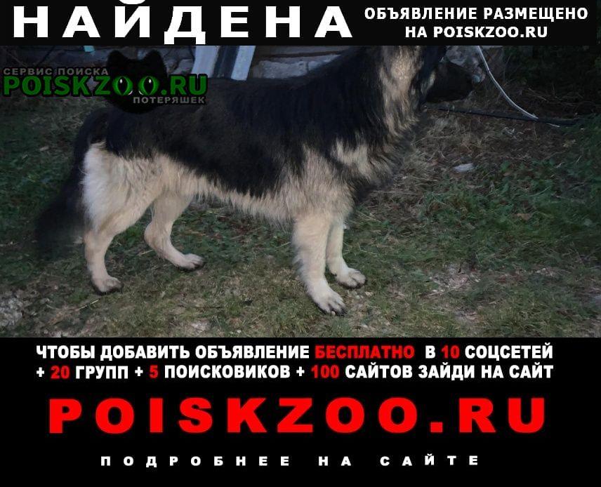 Найдена собака овчарка дер.любиково тульская об Ясногорск
