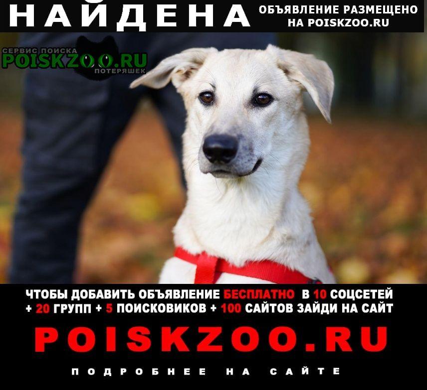 Найдена собака ищет дом молодая девочка юрта Санкт-Петербург