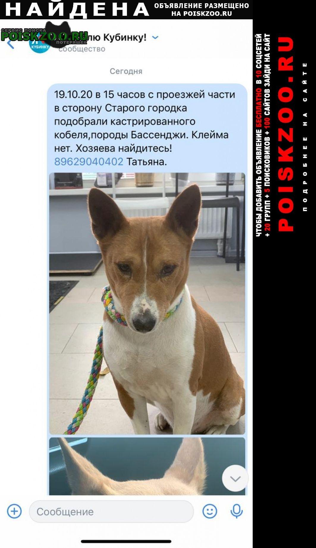 Найдена собака Кубинка