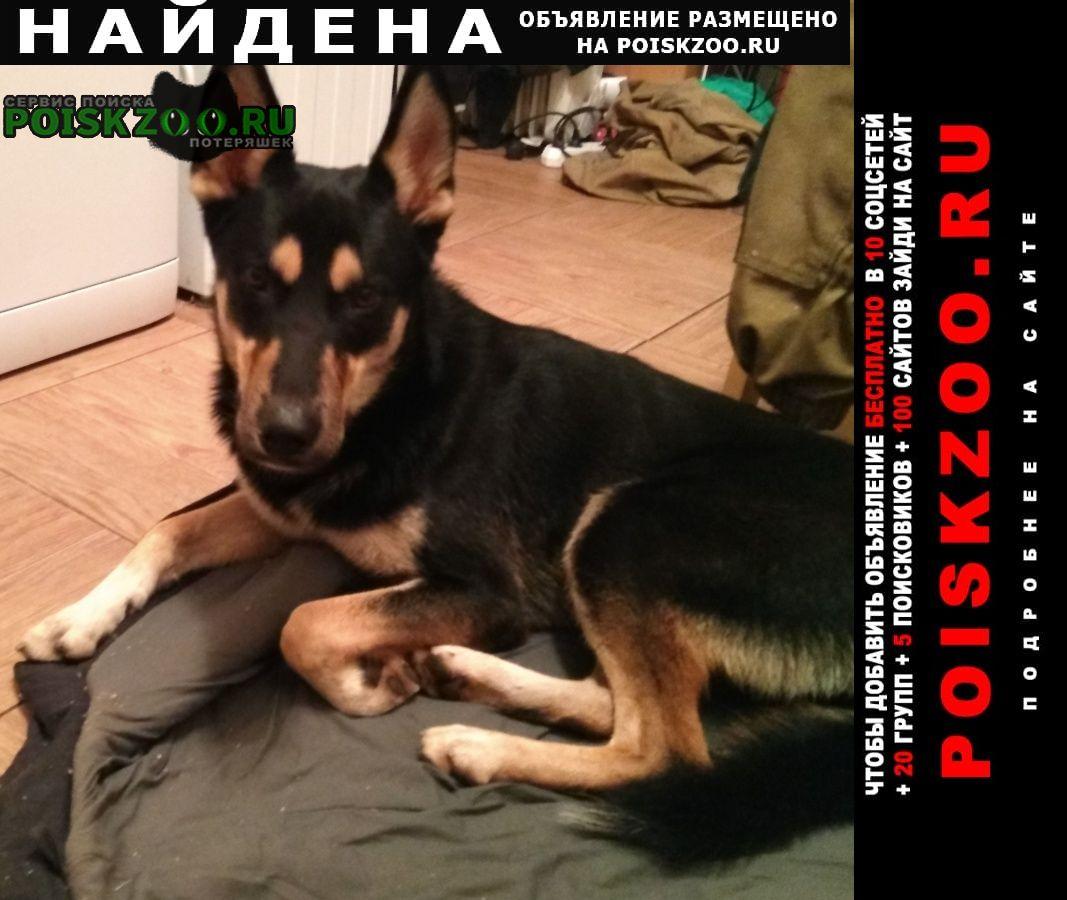 Найдена собака Павловск (Ленинградская обл.)
