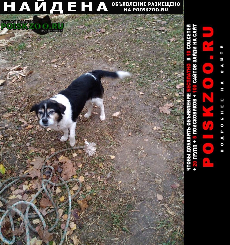 Найдена собака Озеры