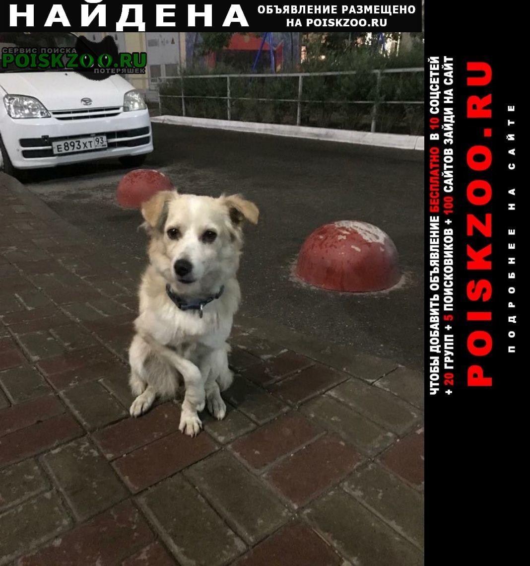 Найдена собака молодая сука с травмированной лапой Краснодар