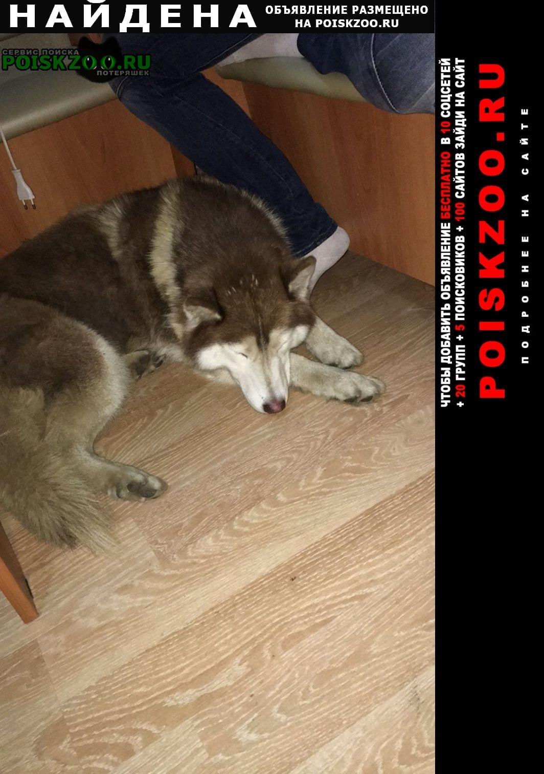 Найдена собака сормово, Нижний Новгород