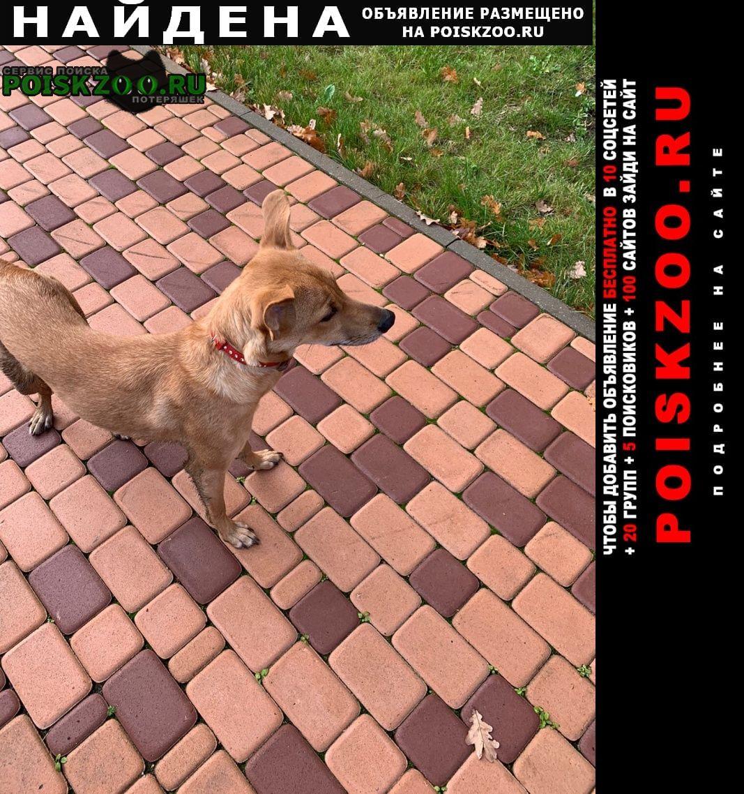 Найдена собака Долгопрудный