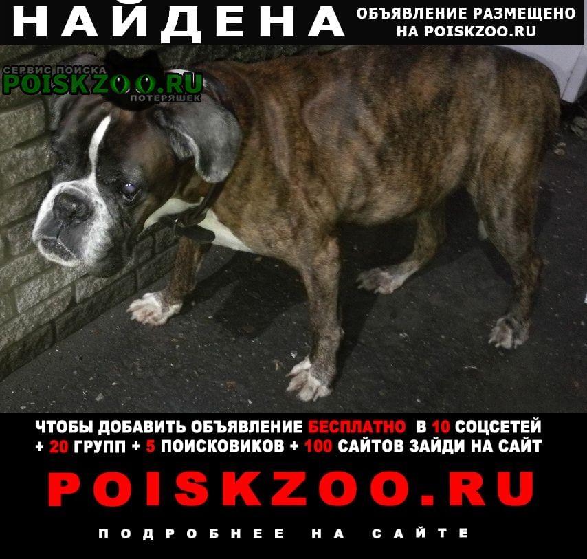 Найдена собака в районе ул.гордеевской Нижний Новгород