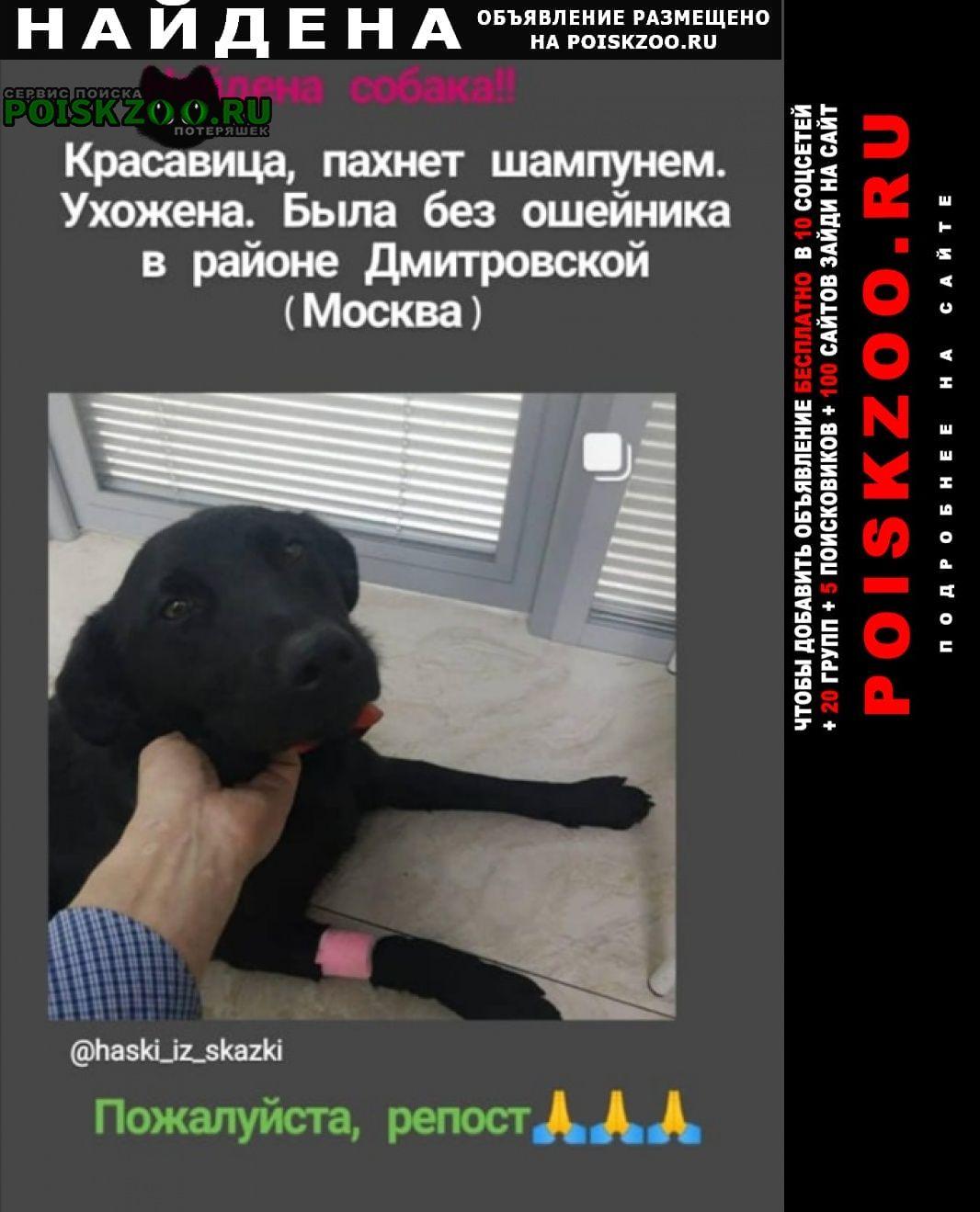 Найдена собака гладкошерстная черная молодая сука Москва